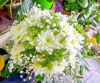 פרחי פנחס - זרי כלה בהוד השרון