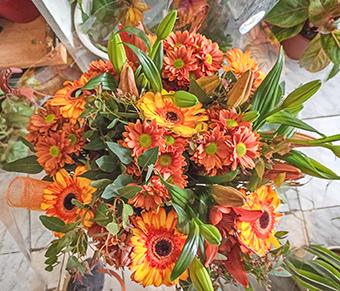 פרחי פנחס - פרחים טריים