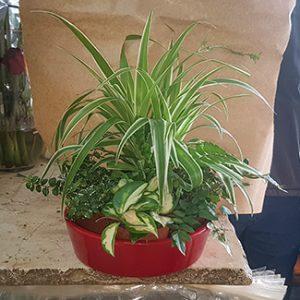 פרחי פנחס - סידור ירוק