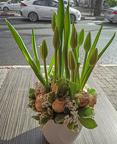 פרחי פנחס - עציצים הוד השרון