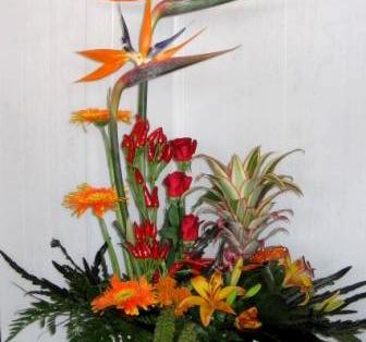 פרחי פנחס - ציפור גן עדן