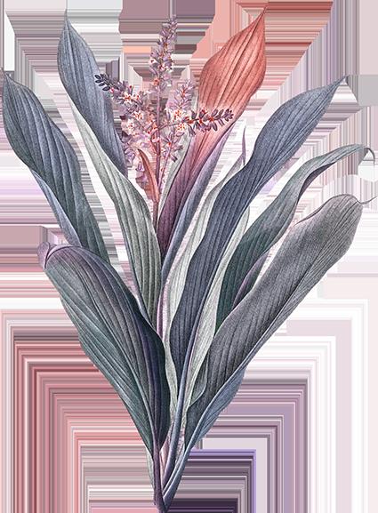 פרחי פנחס - פרחי הילה הוד השרון